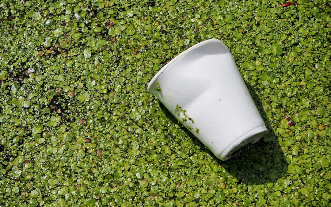 Sustainability: a step-change in packaging
